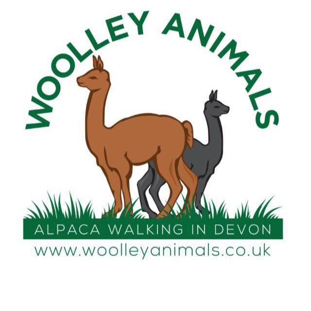 Woolley animal Alpacas